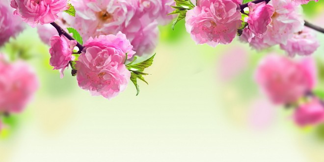 spring-flowers-background (660x413)